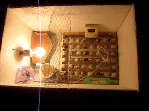 inkubator probelauf kunstbrut 2 h hne wachteln bartag. Black Bedroom Furniture Sets. Home Design Ideas
