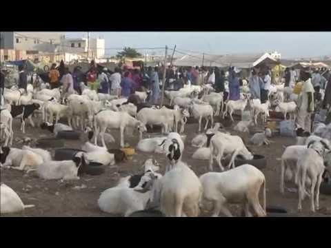 Africa Eid Festival 2014