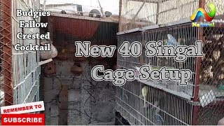How To Make Master Cage New 40 Singal Cage Setup Budgies Fallow and Crested