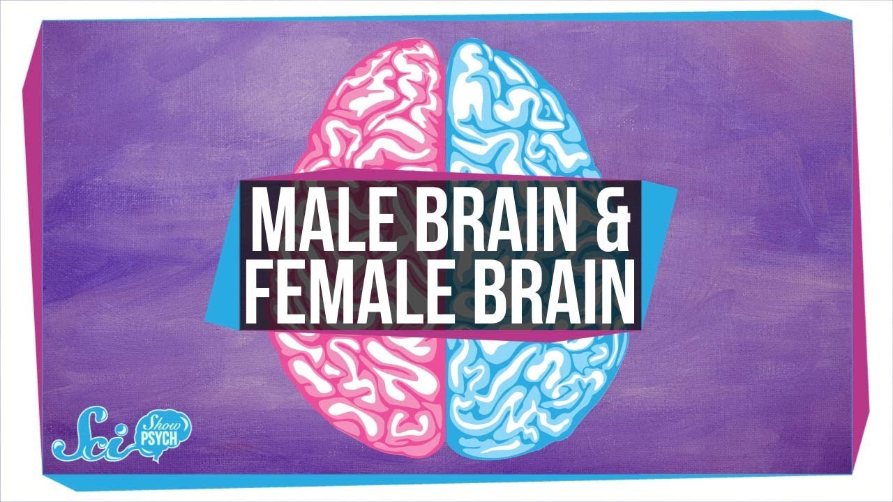 Masculine or feminine brain test