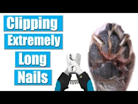 Extremely Overgrown Nail Clip | Tutorial