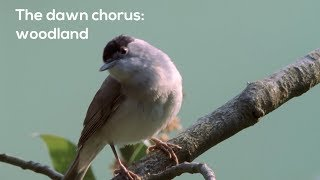 How to…Listen to the woodland dawn chorus