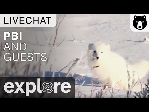 Polar Bears International and Guests - Live Chat