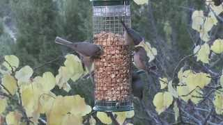 Wild Birds Unlimited - Peanut Feeders