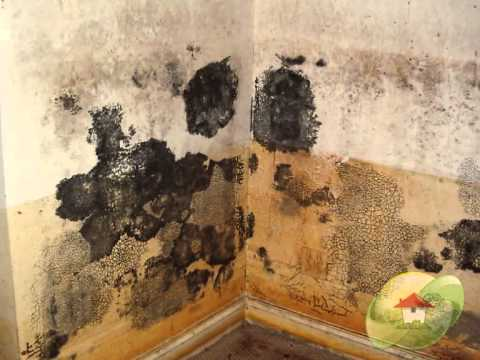 Is black mold dangerous youtube - What to do about mold ...