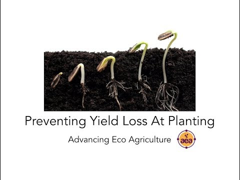 Preventing Yield Loss at Planting