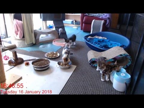 Kitten Inn Live Stream