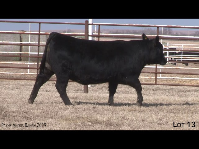 Payne Angus Ranch Lot 13