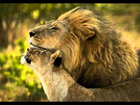 Born Free - The Pride Of Africa
