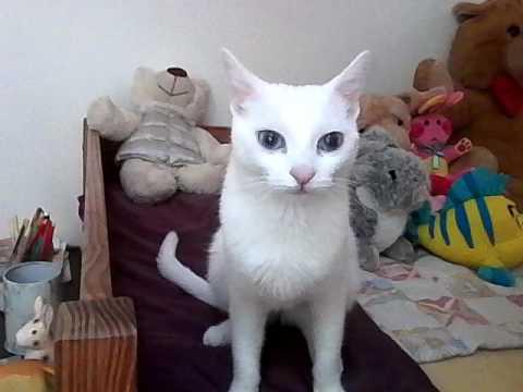 Daisy Mon Chat