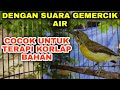 Kolibri Kelapa Gacor  Mp3 - Mp4 Download