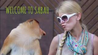 Proboscis - обезьяны Носачи