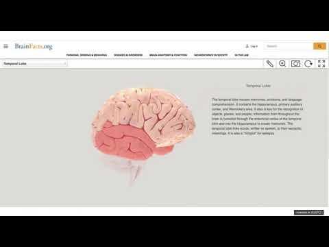 Brain Awareness Week Online: Memory and the Brain