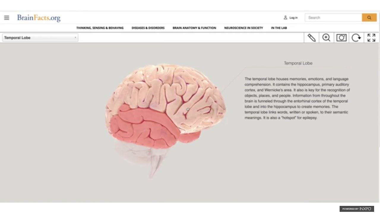 Brain Awareness Week Online: Memory and the Brain - YouTube
