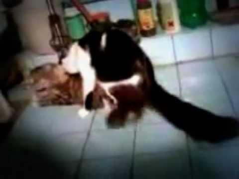 Как трахают кошек