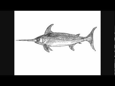 Dibujar peces - Pez espada - Dibujos para Pintar - YouTube