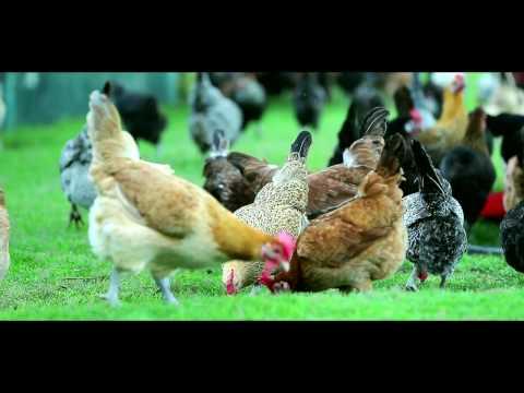Deena Organic Farm
