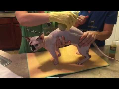 How to give your hairless pet a waterless bath