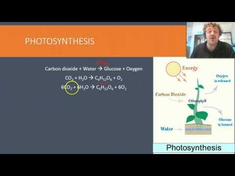 Photosynthesis exo endothermic
