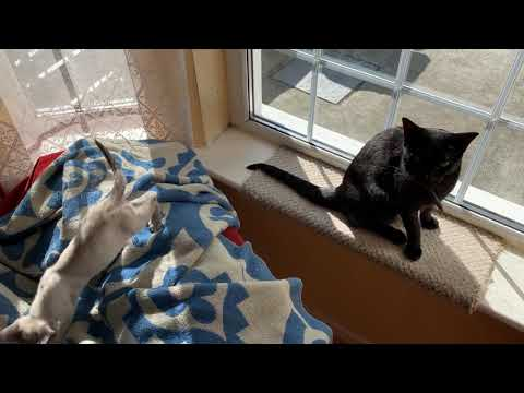 My Cats J & B At Play At Home In Dublin, Ireland 07/22/19