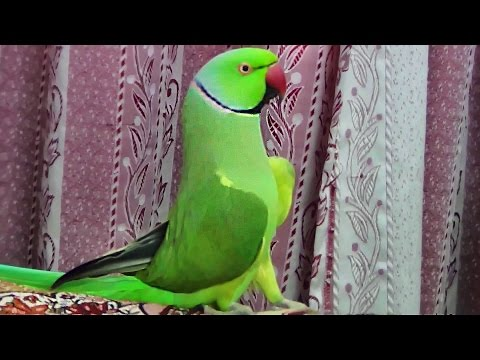 How my Parrot wake me up-My Beautiful bird