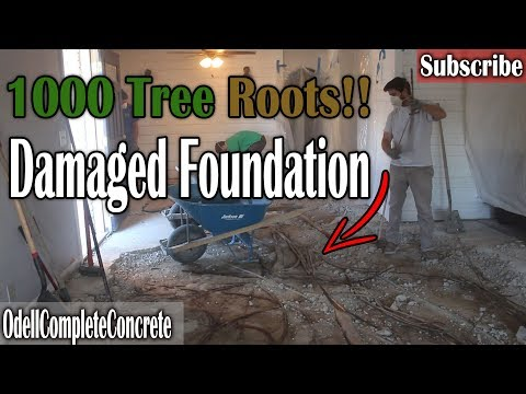 How to Repair a Concrete Foundation, Severe Tree Root Damaged!