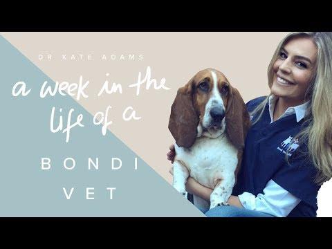 A Week In The Life Of A Bondi Vet [ 1 ] / Dr Kate Adams
