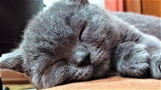 Funny Cats Sleeping | Sleeping Tom