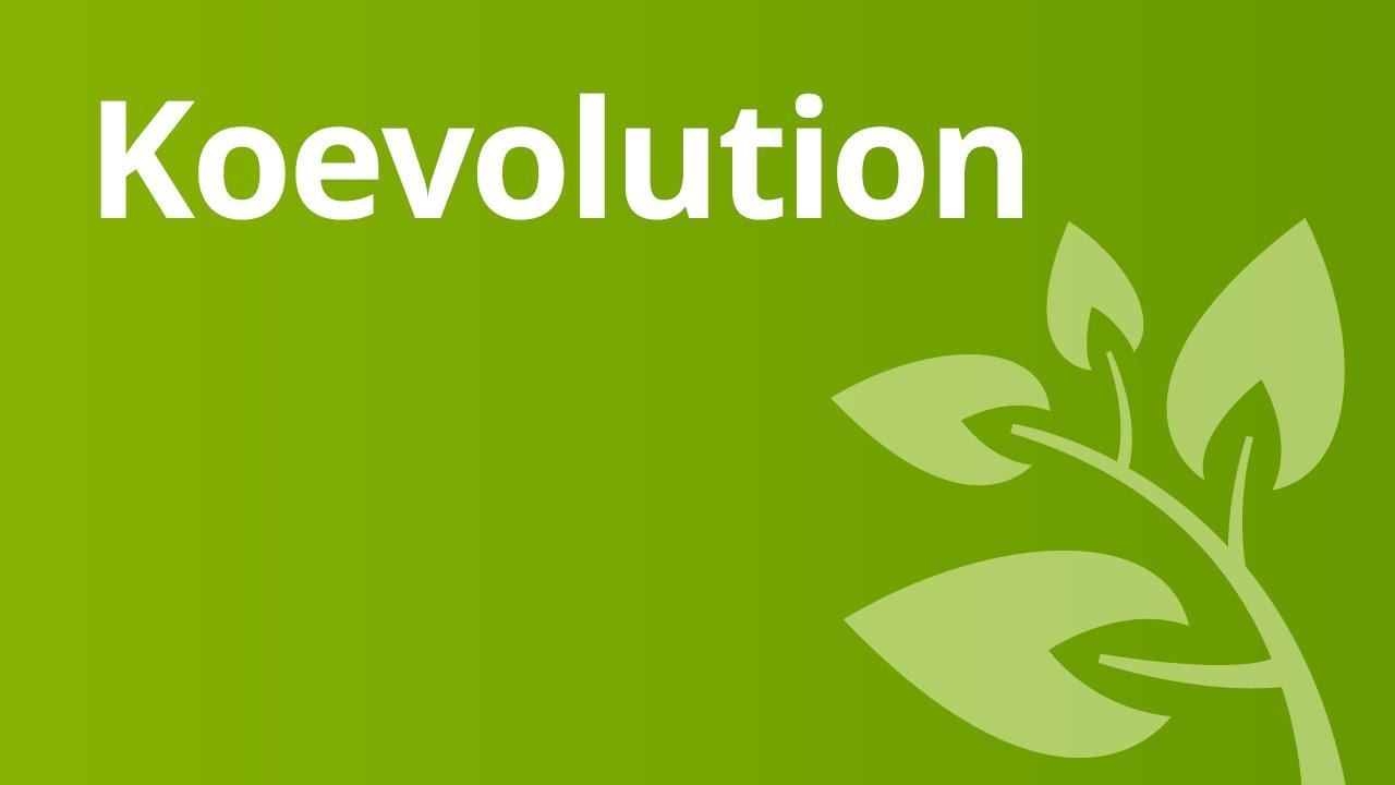 koevolution erlutert biologie evolutionsbiologie - Koevolution Beispiele