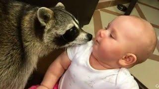 아기와 동물의 귀여운 순간 편집  🐠 🦚🦜 귀여운 아기와 애완 동물