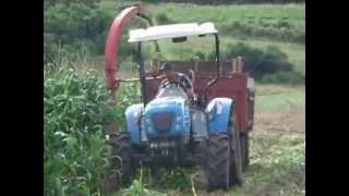 U60R da LS Tractor na ensiladeira mandando vê e sobrando máquina!!