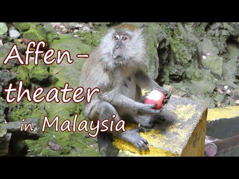 AIDAbella Südostasien - Panang & Kuala Lumpur VLOG 5: Affentheater in Malaysia