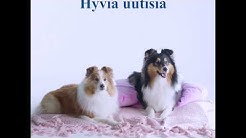 Agria Shetlanninlammaskoira-vakuutus   Agria Eläinvakuutus
