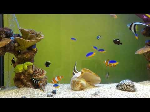 All Colorful Marine Aquarium Fish Species