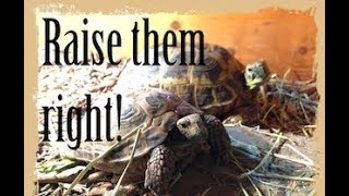 COMPLETE Russian Tortoise Care Tutorial | Indoors and Outdoors |