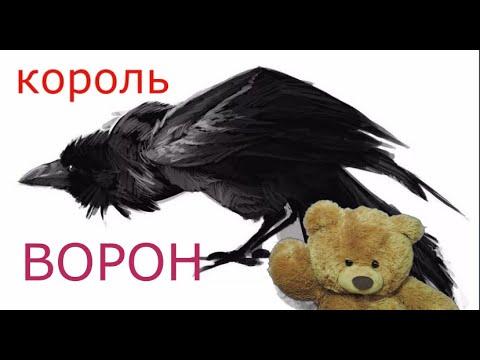Король ворон . сказка рассказанная вороном.