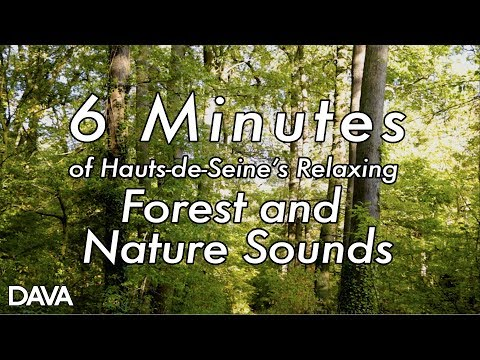 6 Minutes Of Hauts-de-Seine's Relaxing Forest And Nature Sounds