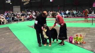 Euro Dog Show 2011 - Bernese Mountain Dog - Junior Class - Male