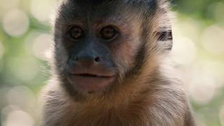 Capuchin Monkey Makes Friends