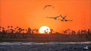 Bay Đi Cánh Chim Biển (Đức Huy) Bằng Kiều - VCH