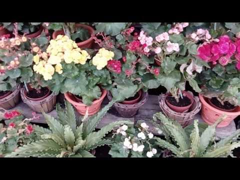 Обновленный магазин цветов в Паттайе. Центральная улица. Часть 1.