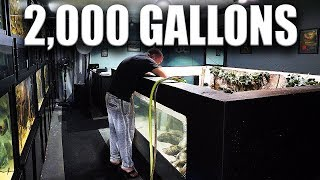 MONSTER FISH TANK CLEANING | The King of DIY
