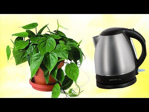 Кипяченая вода для комнатных растений! Стоит ли поливать растения кипяченой водой?
