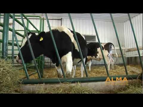 The Alberta Johne's Disease Initiative