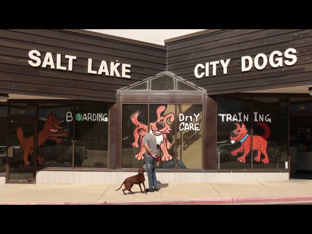 Real Dog Trainers of SLC- A day in the life of a Salt Lake City dog training comp