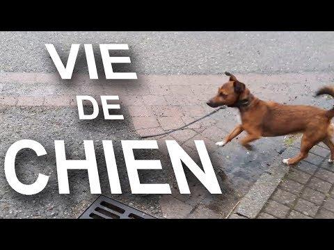 VIE DE CHIEN -  PAROLE DE CHIEN