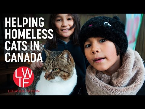 Helping Homeless Cats (in Canada)