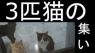 【可愛い】3匹の集い…親猫が飯を貪り食べる thumbnail