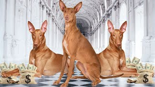 10 Most Expensive Dogs in the World  2020