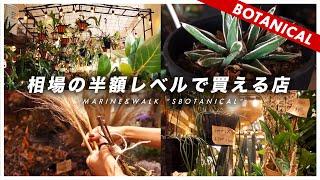 【植物が半額レベル】めちゃくちゃ安かったので紹介します(初心者もおすすめ)